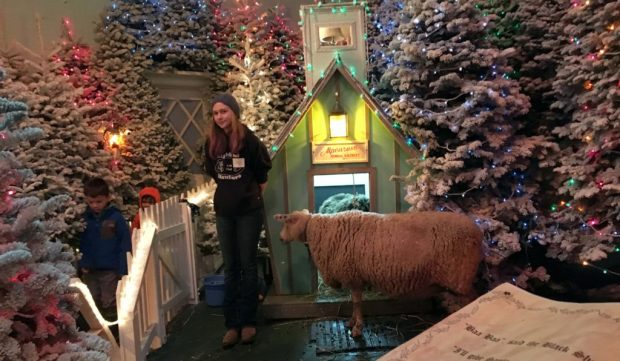 christmas-in-dairyville-sheep