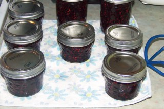 Blackberry jam jars cooling