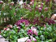 mässa vår trädgård 12