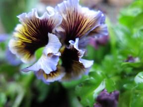 Vårplantering 2014 3
