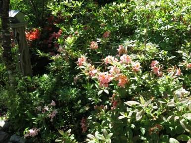 14 juni sta riksmöte 2014 trädgård nr 3 4