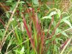 15 aug 15 solrabatten blodgräs