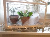 sovrum krukväxter 2