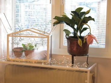 sovrum krukväxter