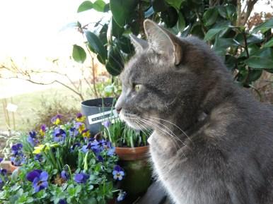 12 mars 16 ingång vårblommor katt