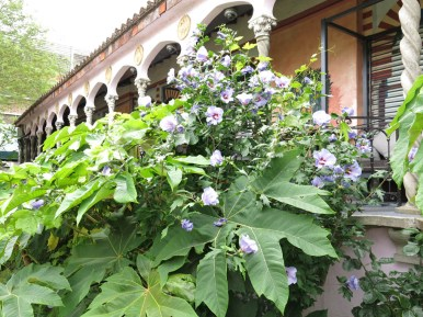 3-aug-15-roof-garden-spanish-19