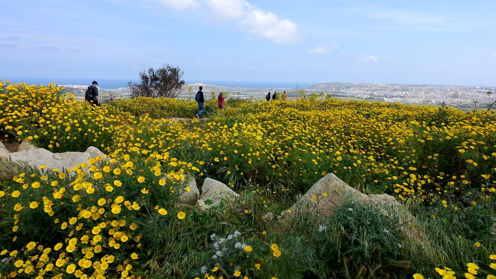 Victoria Lines Trek in Malta. Best Time to walk Victoria Lines