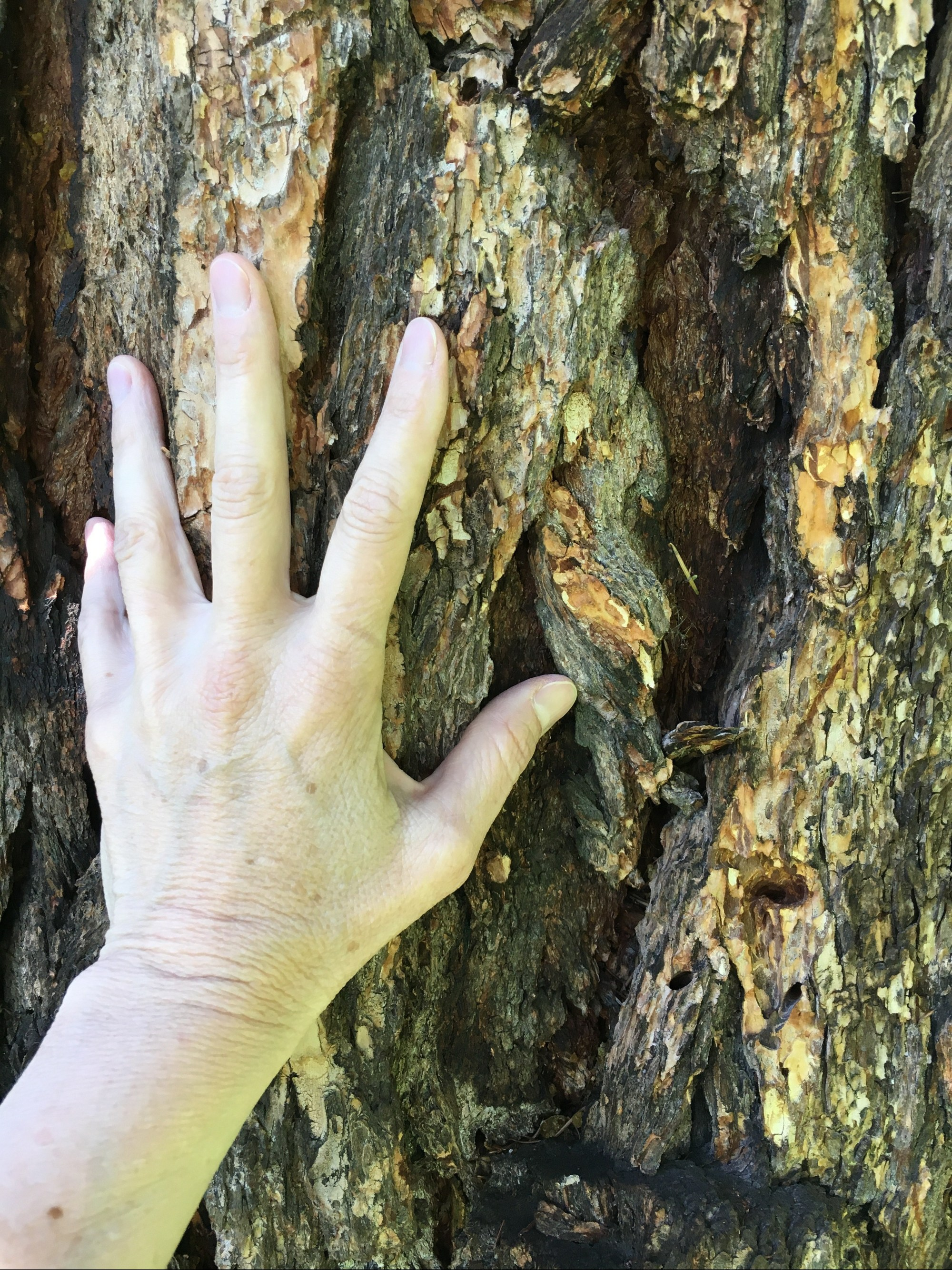Laying hands on a tree