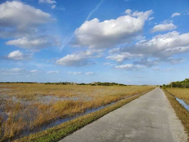 Shark Valley Tram Road, Everglades National Park