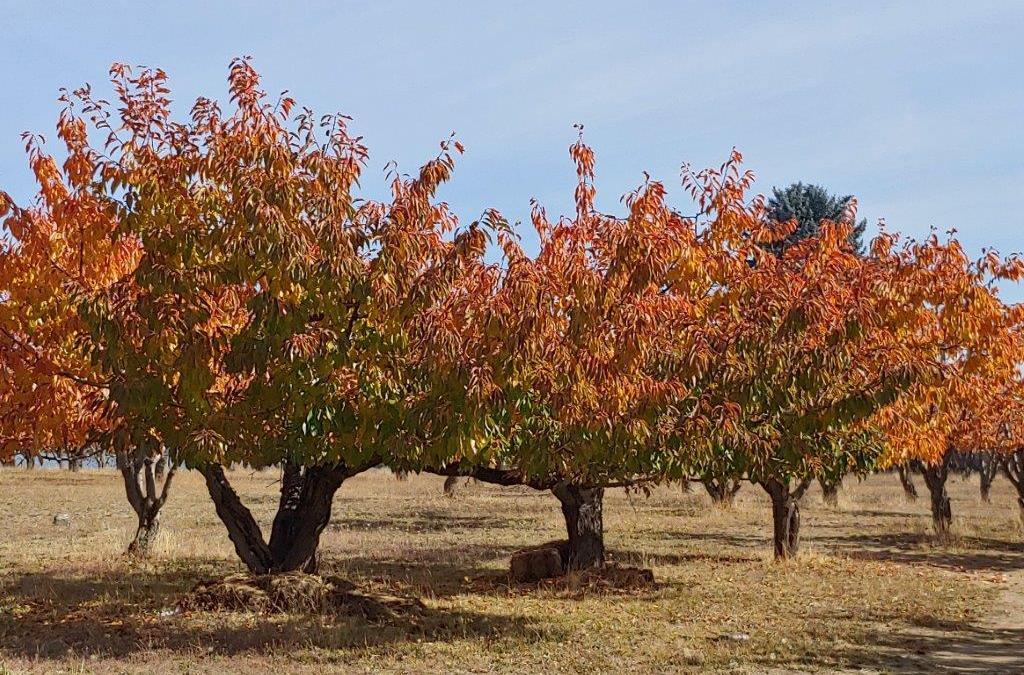 Fall in Northern Idaho
