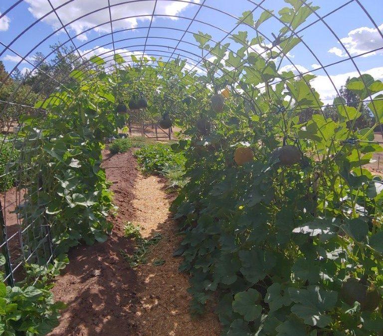 2021 Garden Report