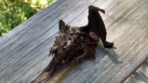 Bat 14