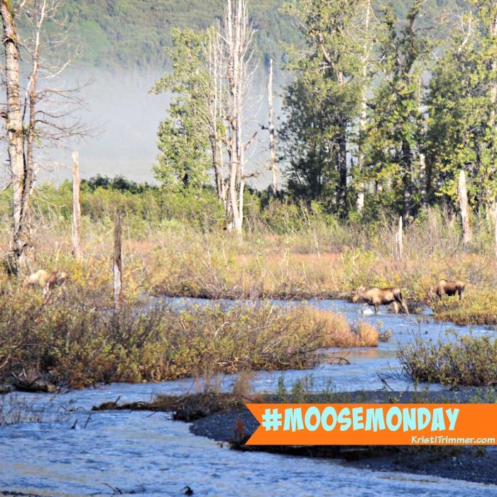moose-monday-wait-up-mom