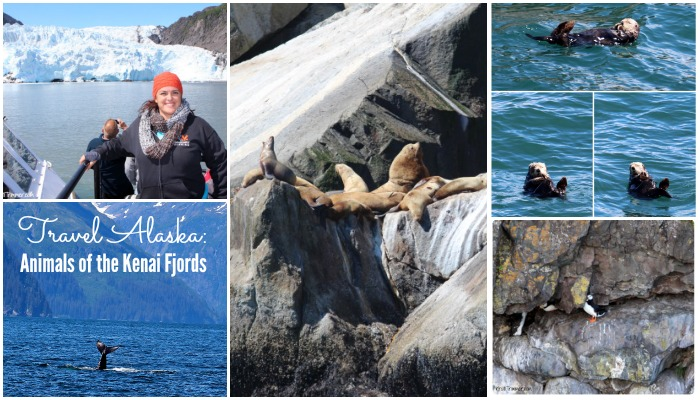 6-8-14 Travel Alaska- Animals of the Kenai Fjords feature