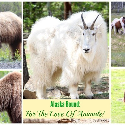 Alaska Bound: For The Love Of Animals!