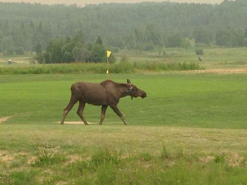 golfing in alaska