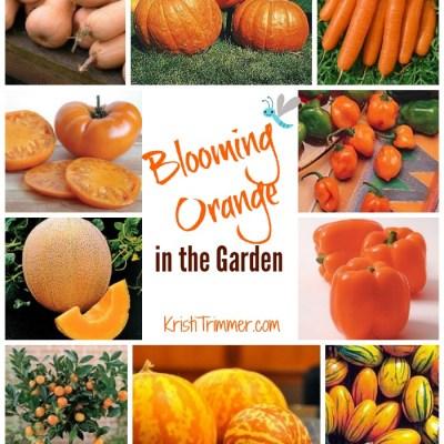 Blooming Orange in the Garden