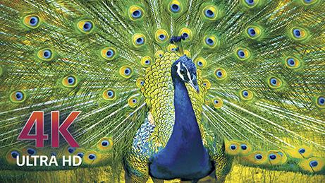 Best Buy LG OLED Peacock