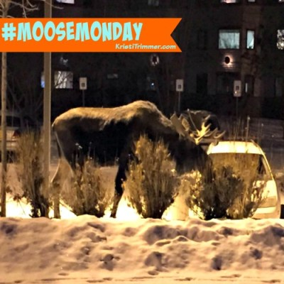 Moose Monday in Vegas!
