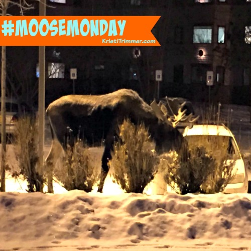 Moose Monday At Apt - 1