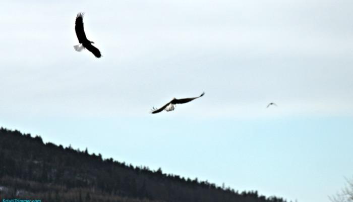 3 Eagles Flying