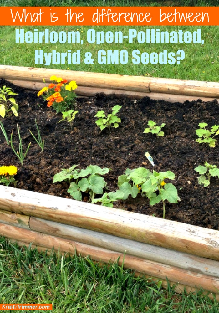 What Is The Difference Between Heirloom Open Pollinated Hybrid And Gmo Seeds