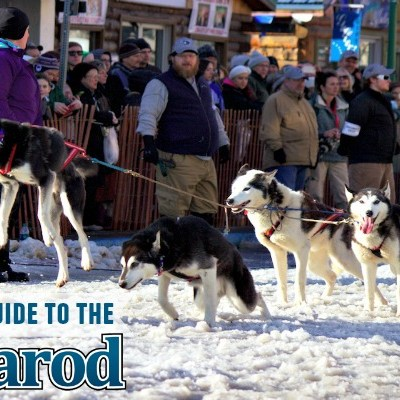 A Newbies Guide to the Iditarod
