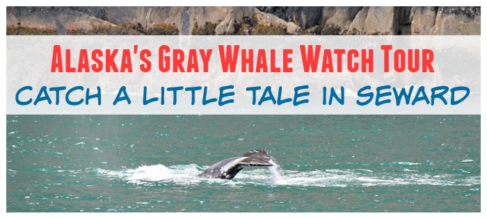 Alaska's Gray Whale Watch Tour: Catch a Little Tail in Seward