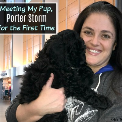 Meeting My Pup Porter Storm for the First Time