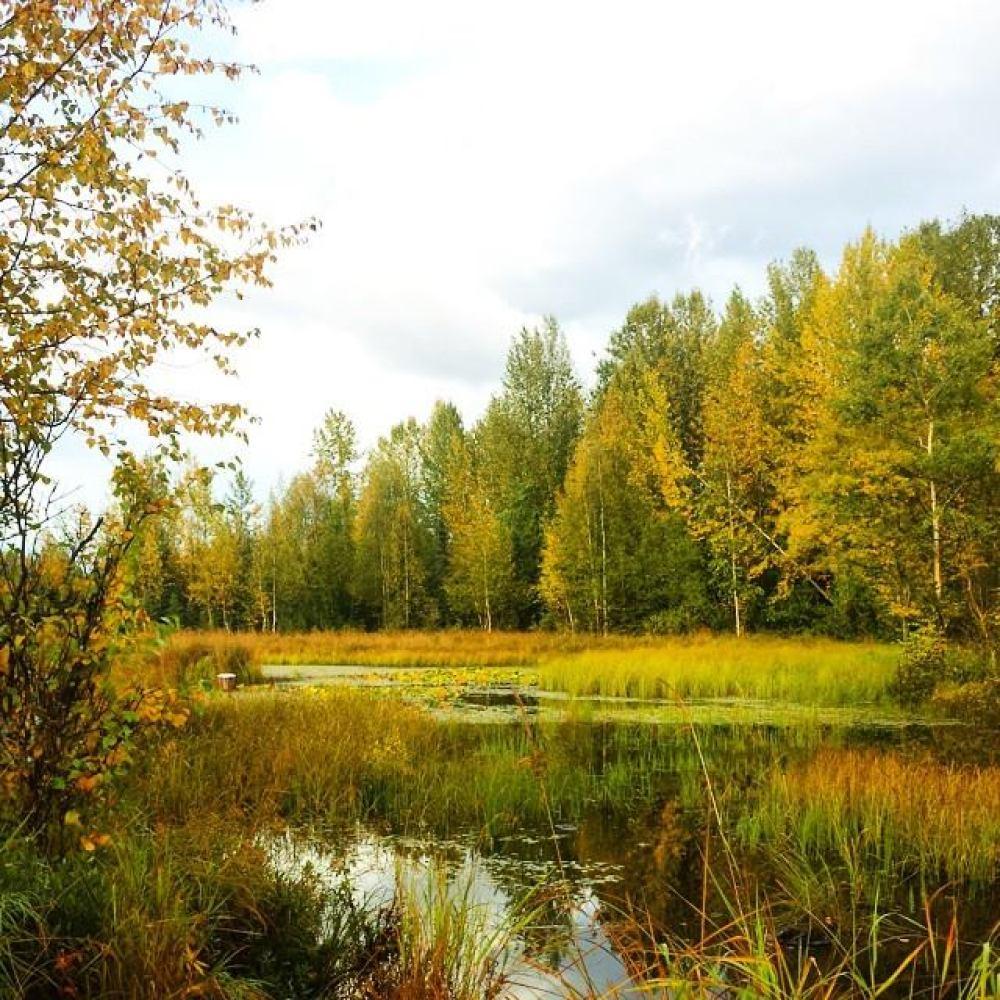 Fall Colors in Alaska #alaska #fallcolors #autumn