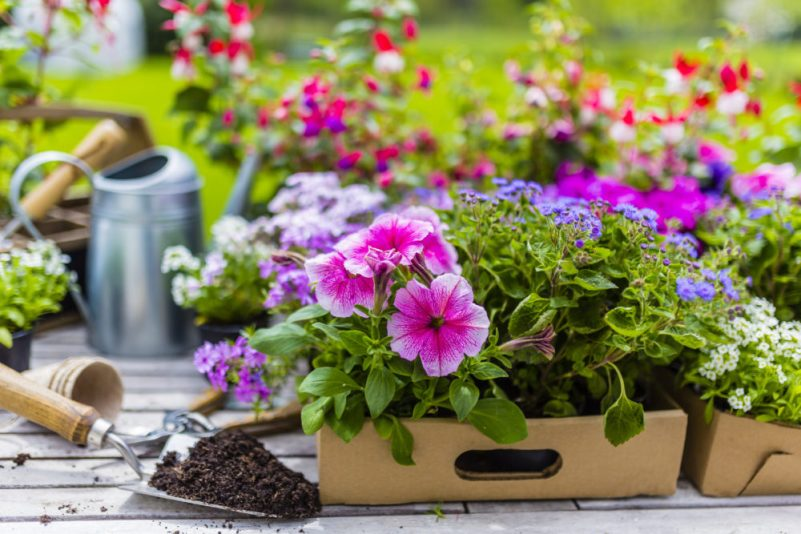 Seed Plant Bloom Subscription Box #gardeningsubscriptionbox #gardening #subscriptionbox