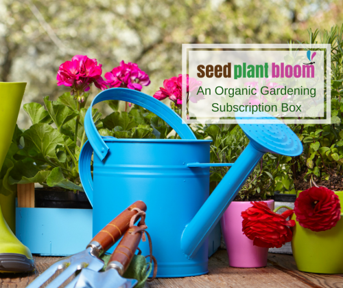 Seed Plant Bloom Subscription Box