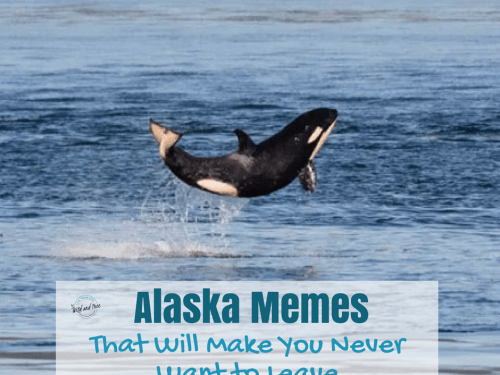 46 Alaska Memes That Will Make You Never Want to Leave #alaska #alaskamemes #memes #funny