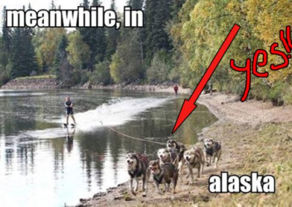 Alaska Memes That Will Make You Never Want to Leave #alaska #alaskamemes #memes #funny