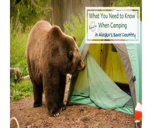 What You Need to Know About Camping in Alaska's Bear Country #bear #bearsafety #camping #campingtips #alaska