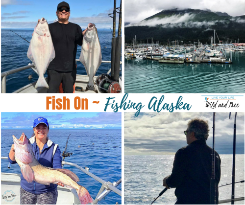 Fishing in Alaska #charterfishing #fishak #alaskafishing #alaska #fishing