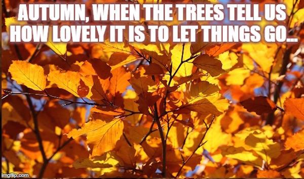 Autumn, when the trees tell us how lovely it is to let things go #fall #autumn #fallmemes #memes #letgo #letthingsgo #lettinggo