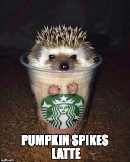 Where can I order a Pumpkin Spikes Latte? #fall #autumn #fallmemes #memes #psl #pumpkinspicelattes #pumpkin #hedgehogs