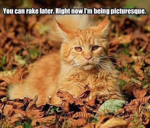I'm looking regal AF #fall #autumn #fallmemes #memes #cats #catmemes
