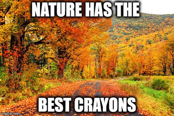 Nature has the best crayons. #fall #autumn #fallcolors #fallmemes #memes #crayons