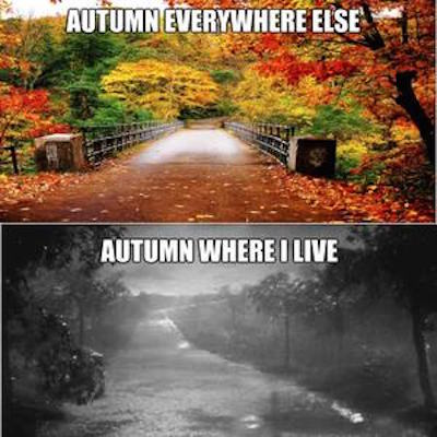 Autumn where I live #fall #autumn #fallmemes #memes #autumnwhereilive