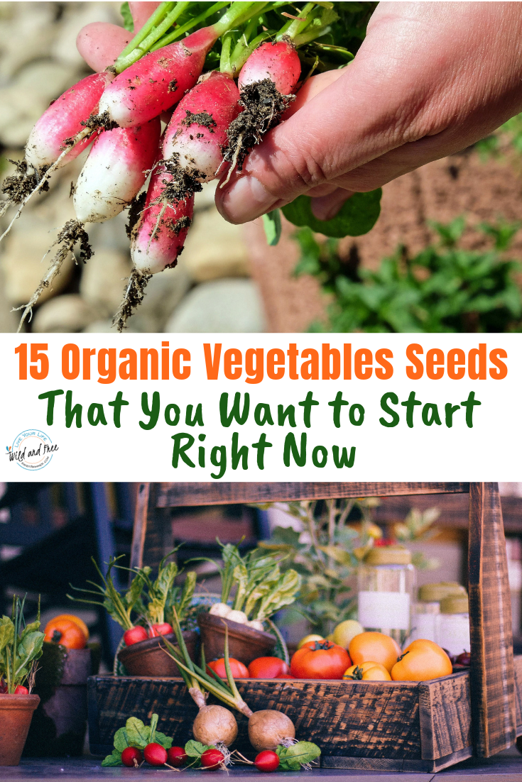 15 Organic Vegetables Seeds That You Want to Start Right Now #vegetablegardening #organicgardens #gardeningtips
