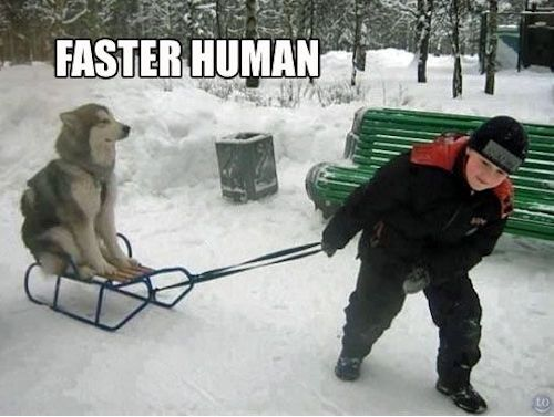 Iditarod Memes That Will Make You Want to Be There #funny #iditarod #alaskasleddogs #dogmemes