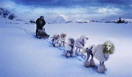 Iditarod Memes That Will Make You Want to Be There #funny #iditarod #alaskasleddogs