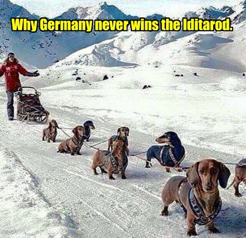 Why Germany Never Wins the Iditarod
