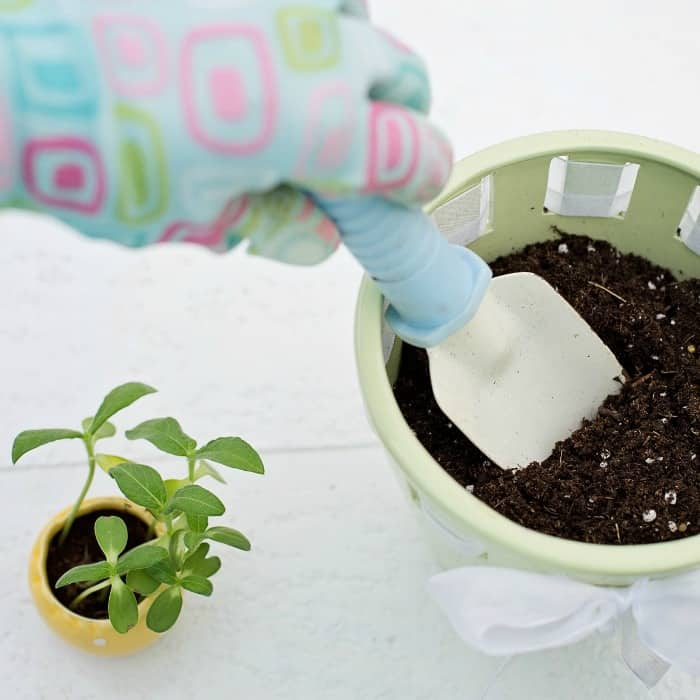 Spring Gardening on a Budget