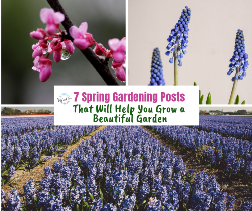 7 Spring Gardening Posts That Will Help You Grow a Beautiful Garden. Tips from a few gardening experts on how to create a garden, what to plant and when, plus how to do it without breaking the bank. #springgardening #gardentips