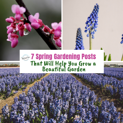 7 Spring Gardening Posts That Will Help You Grow a Beautiful Garden