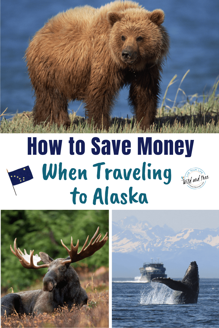 How to Save Money When Traveling to Alaska. Alaska is by far from an inexpensive vacation, but hopefully these tips will help you save a little on your Alaska vacation #traveltips #alaska #travelalaska #visitalaska