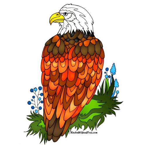 Bald Eagle Sticker from Alaska Wild & Free